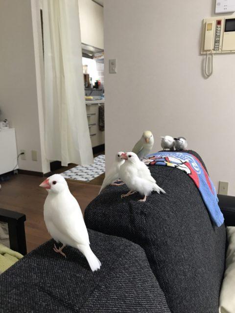 鳥たちの写真